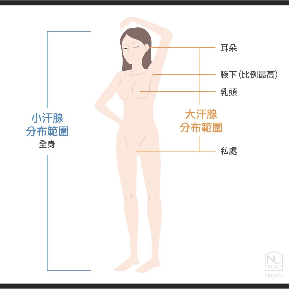 腋下多汗跟狐臭的汗腺關係