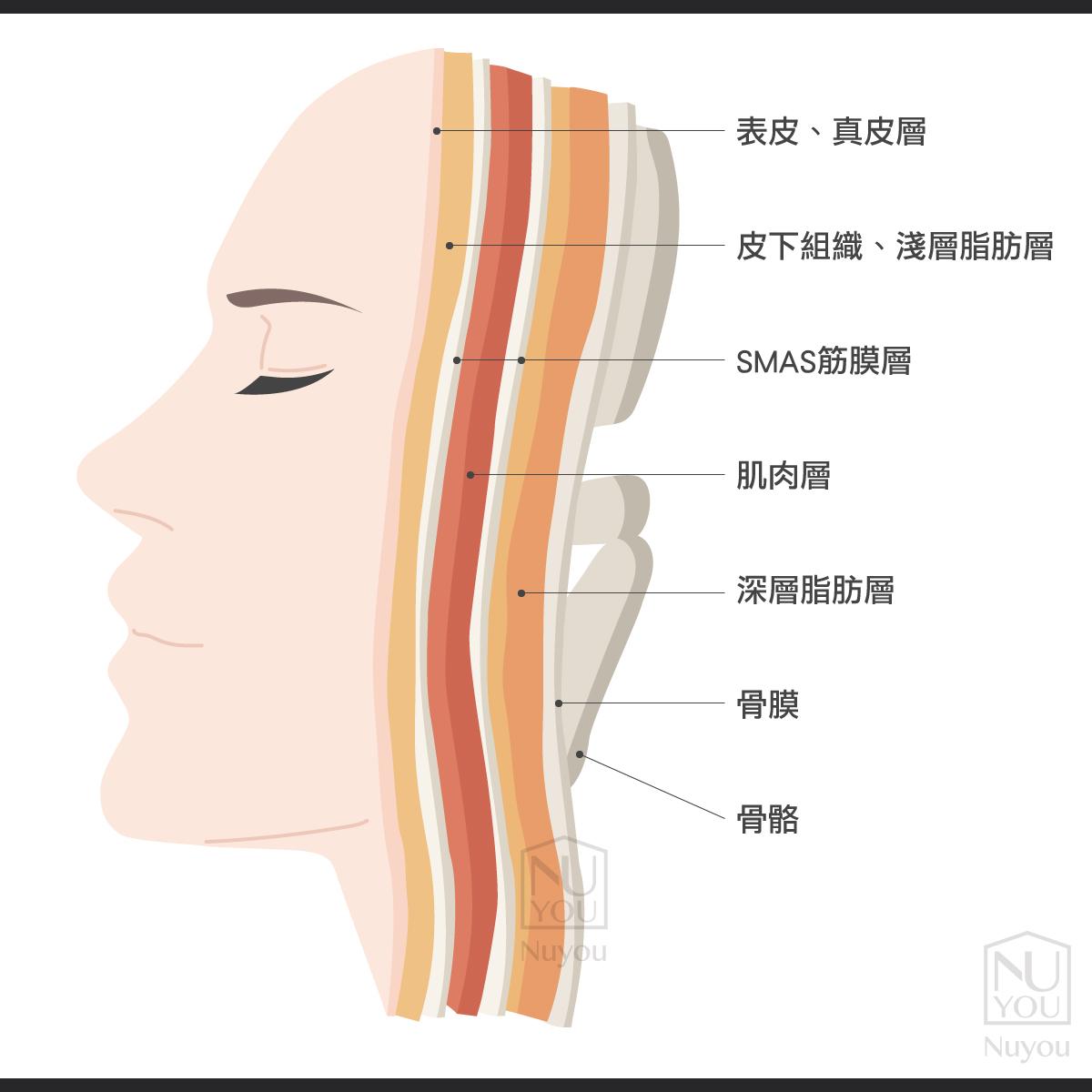 皮膚層次圖
