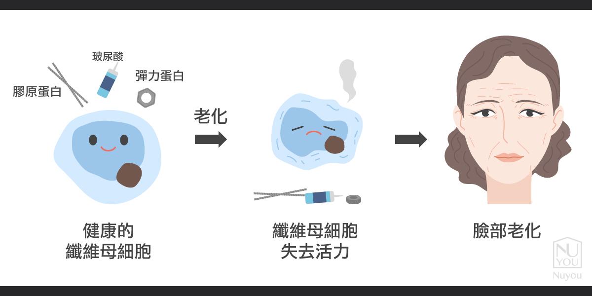 真皮層膠原蛋白流失